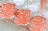 Etude des cellules